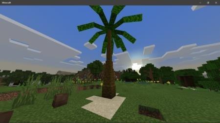 пальма на равнине